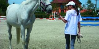 Calul este o reflexie a comportamentului omului