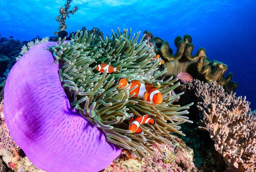 Schimbări şi ecosisteme