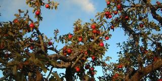 Ţi-ar plăcea să fii un pom fructifer?