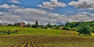Industriileculturale şi creative depășesc agricultura în PIB-ul ţării