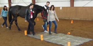 Caii - facilitatori în seminarii de leadership
