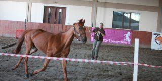 The Horse Connection, program de leadership realizat cu ajutorul cailor, implementat si in Romania
