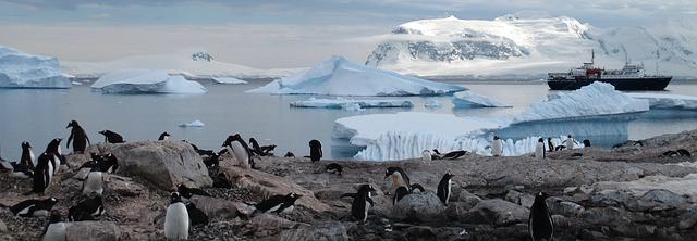 De la domnisoare de onoare, la cei care intorc pinguinii: 8 locuri de munca neobisnuite si bine platite