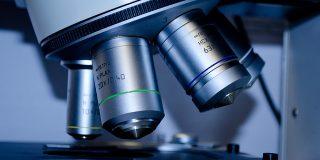 Ce pot invata echipele de marketing din biologie?