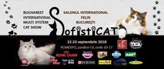 Competitii si expozitii cu feline la Salonul International Felin Bucuresti 2