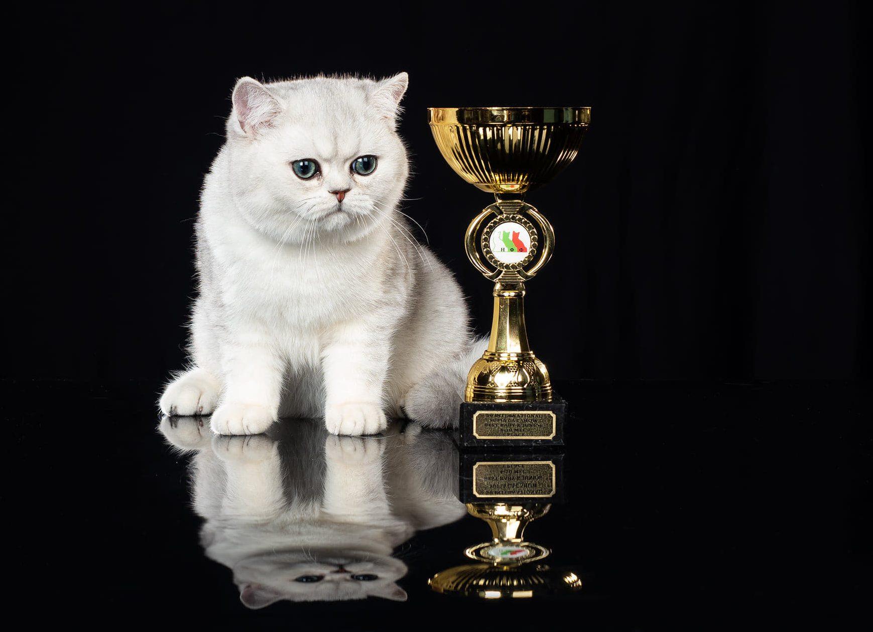 Peste 200 de pisici din toate colturile lumii vor putea fi admirate la SofistiCAT