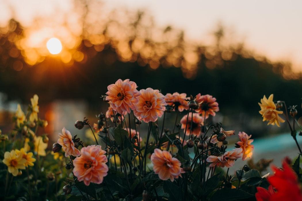 Romanii daruiesc mai multe flori: business-urile din domeniul floral si-au dublat cifra de afaceri in ultimii 5 ani